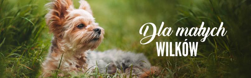 Karma dla psów małych ras