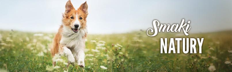 Karma dla psów dorosłych