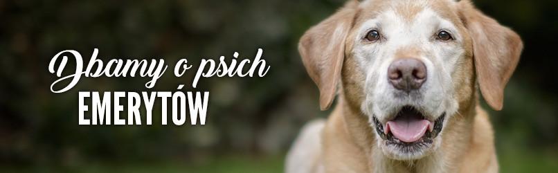 Karma dla psów seniorów - Jedzenie dla psa seniora